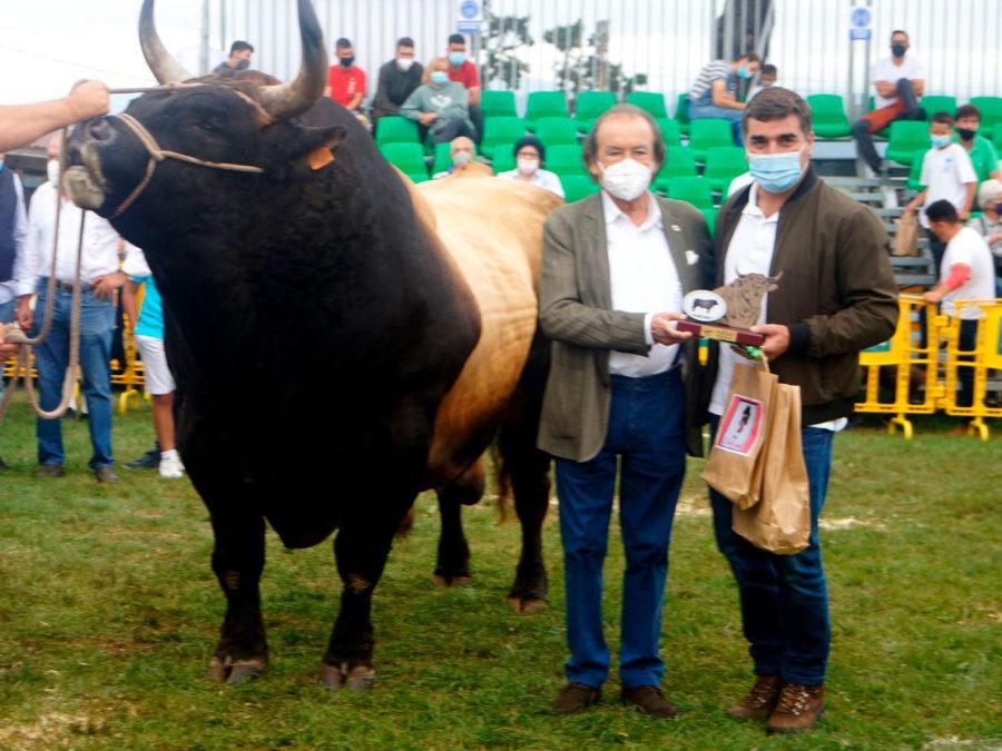 ganaderia asturiana de los valles